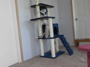 savannah kittens playrooma