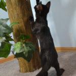 F7-Savannah-Kittens-marag1meln