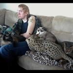 savannah cats ya2c