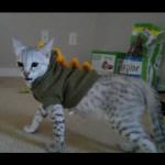 savannah cats ya2n