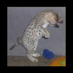 savannah kittens for sale y2f