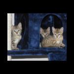 savannah kittens for sale y2g