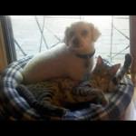savannah kittens ya1t