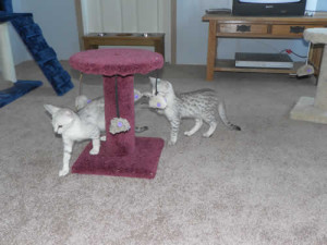 Our Cattery Kitten Playroom