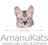 Savannah Kittens by Amanukatz