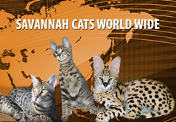 Savannah Kittens Wworld Wide