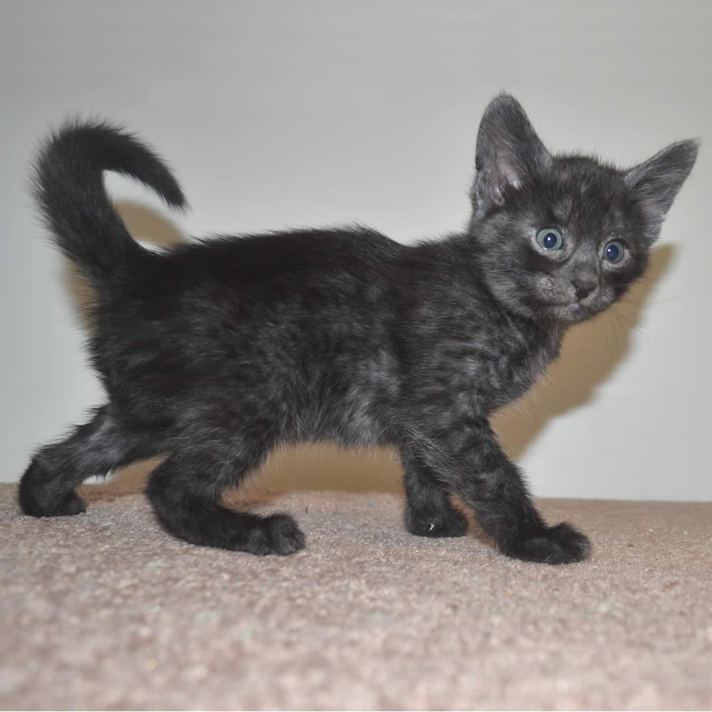 Kittens For Sale Omaha